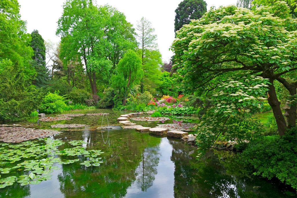 Пруд в Япоснком саду