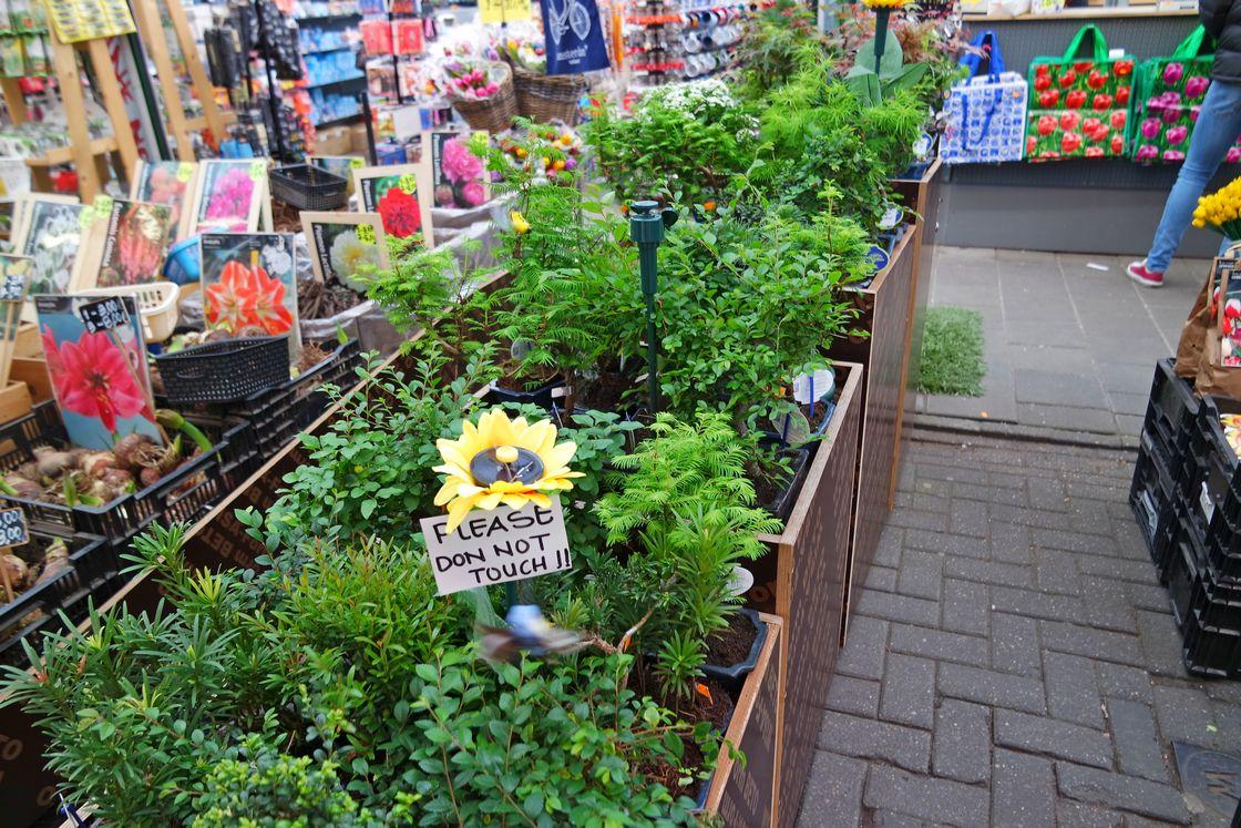 Цветочный рынок. Готовые горшки с цветами