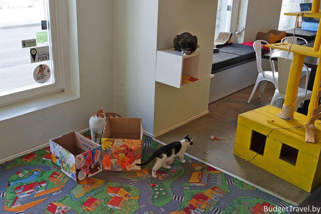 Коробки для котов